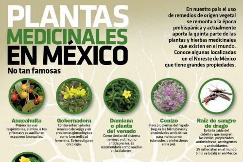 La Gobernadora Planta Medicinal
