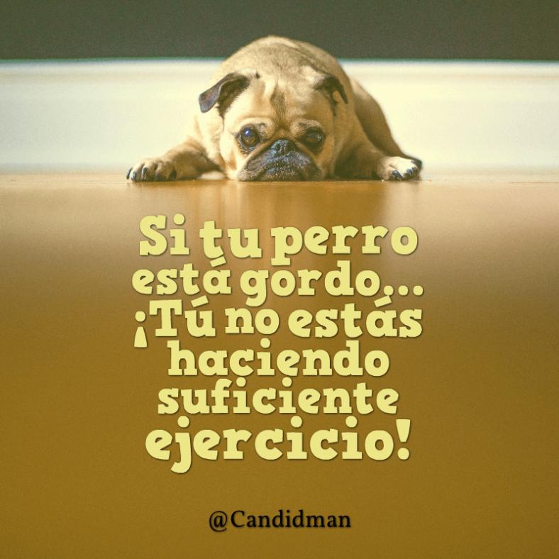 20160507 Si tu perro está gordo... ¡Tú no estás haciendo suficiente ejercicio! - @Candidman
