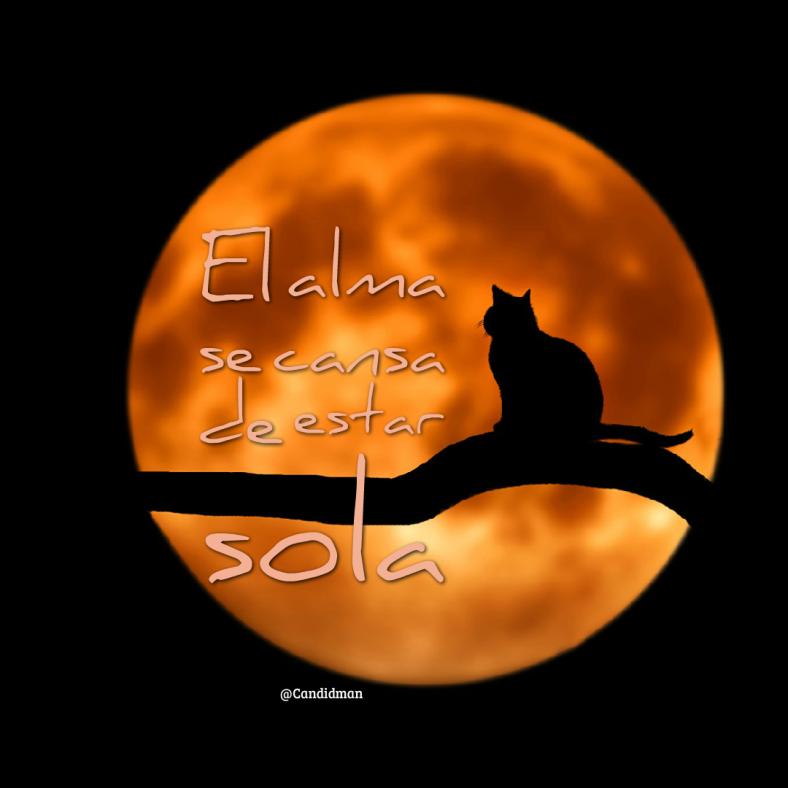 20161204-el-alma-se-cansa-de-estar-sola-candidman-instagram